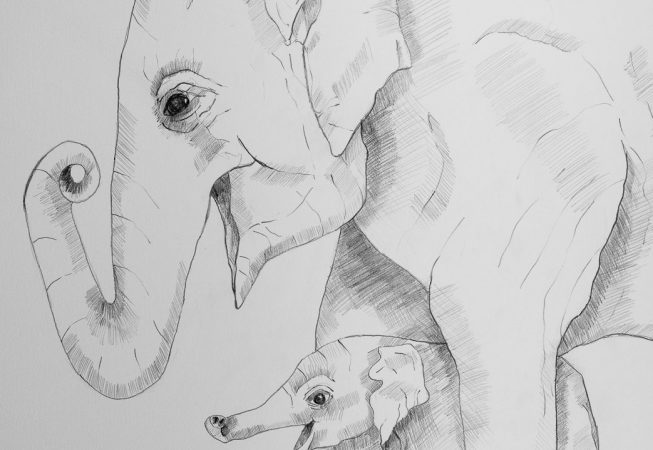 Learning how to use his trunk. 41cmx29cm  Pencil on paper