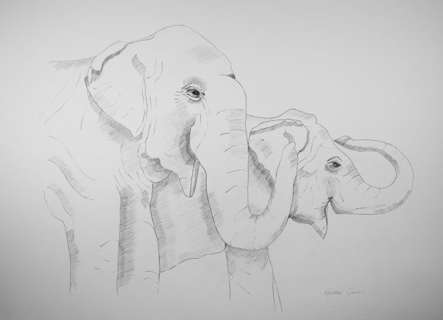 Watching the little elephants have fun in the water!  41cmx29cm  Pencil on paper